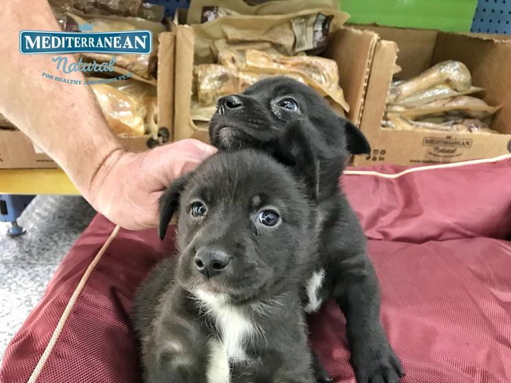 Perros en adopción: Zipi y Zape