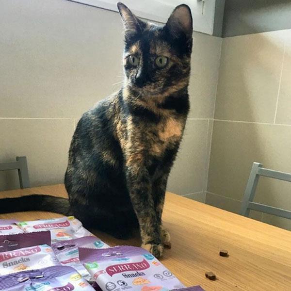 Xenakirasistercats y Serrano Snacks para gatos de Mediterranean Natural
