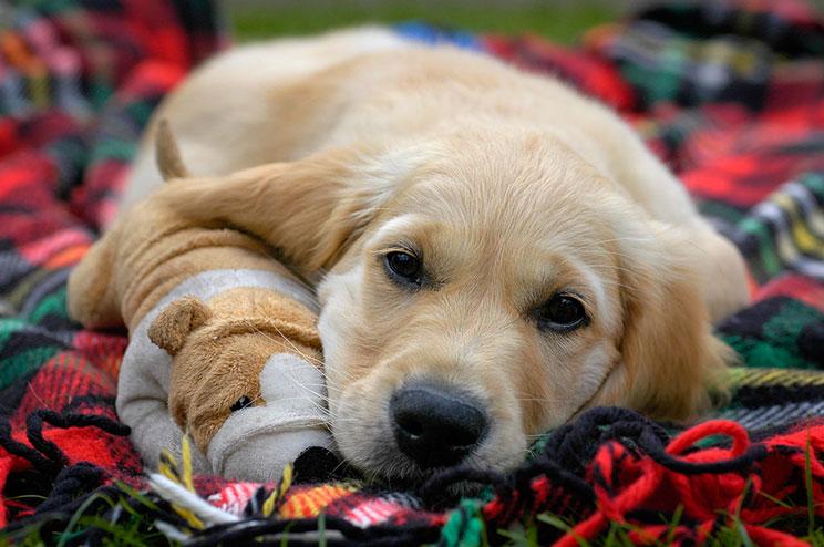 Qué juguetes elegir para un cachorro