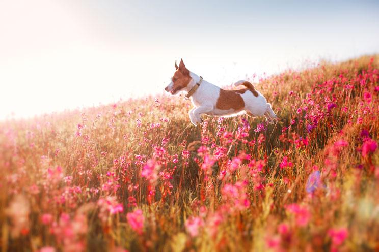 6 peligros que acechan a tu perro en primavera