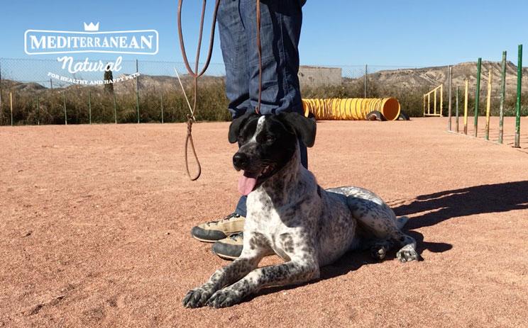Elegir-collar-o-arnes-para-mi-perro-cual-es-mejor-1