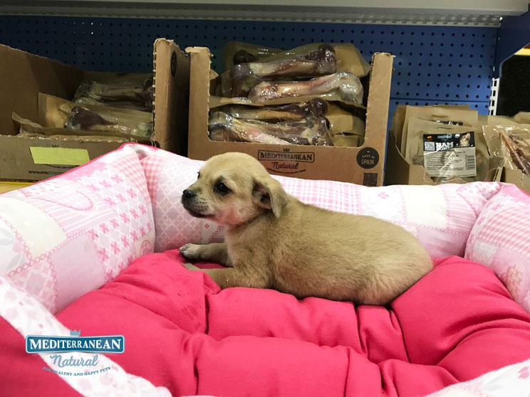 Perros en adopción: 2 + 2 = 4