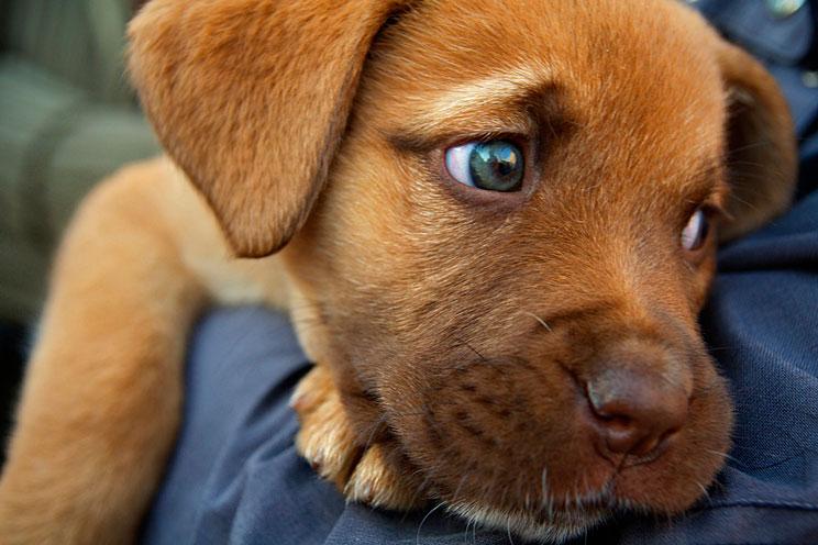 Análisis de sangre en perros: Cómo interpretar sus resultados