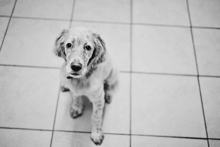 Alimentos que un perro nunca debe comer