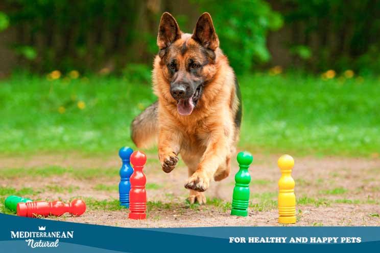 10 ejercicios de estimulación olfativa para perros en casa