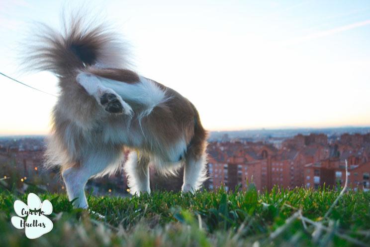 Analisis-de-orina-en-perros-como-interpretar-sus-resultados-1