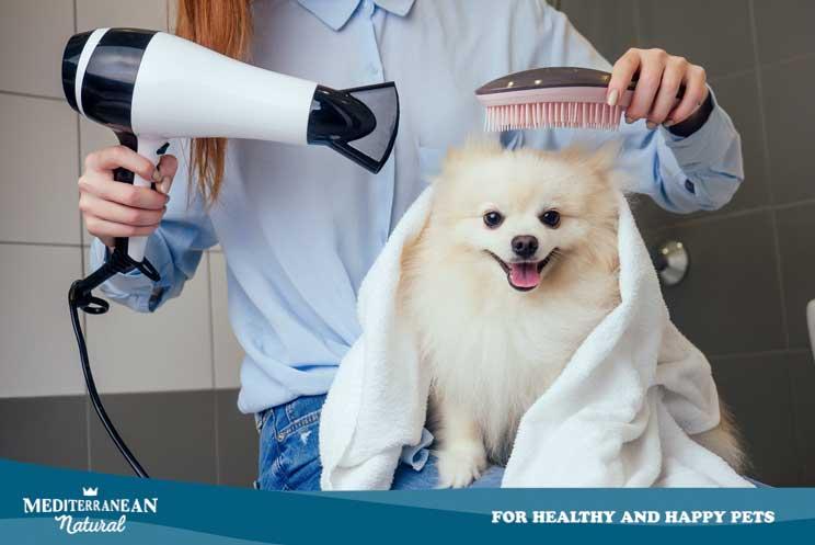 Bañar a u perro en casa ¿cómo debe hacerse?