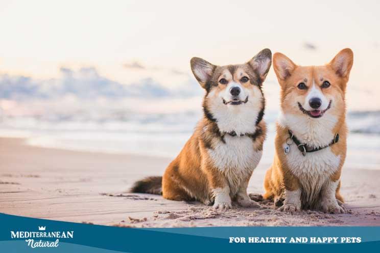 Listado y localización de playas que admiten perros en España