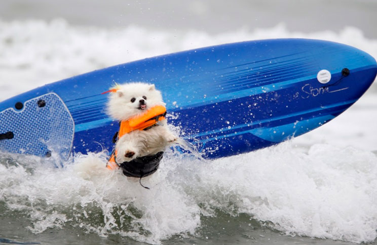 Paddle Surf: una divertida actividad acuática para practicar con perro
