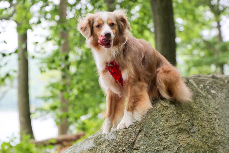 10 consejos para practicar senderismo con tu perro