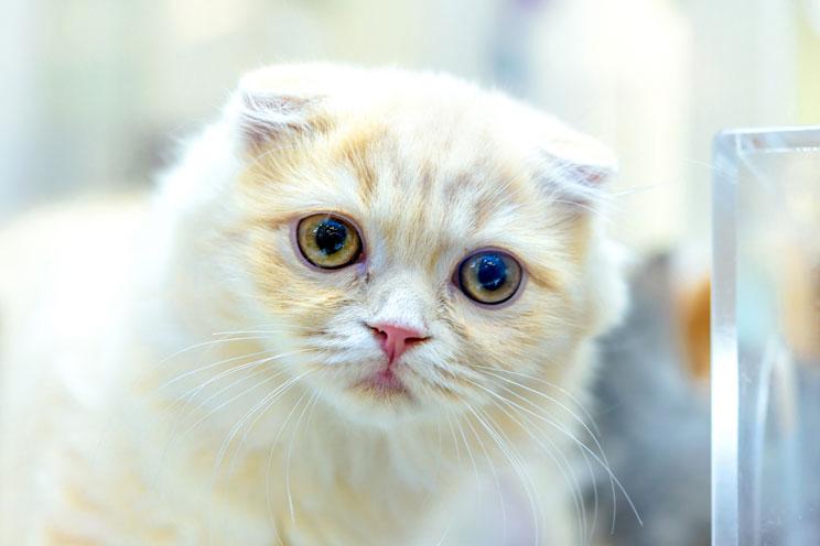 Tu-gato-sufre-con-las-altas-temperaturas-aprende-como-ayudarlo-3