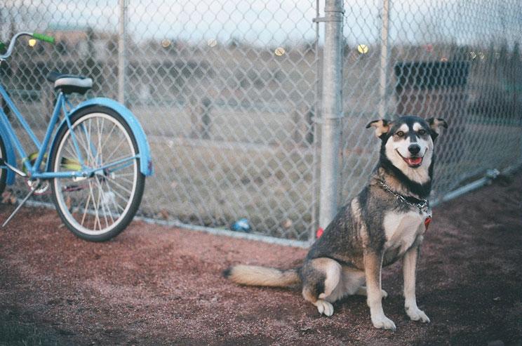 Cuándo y por qué esterilizar a mi perro o gato: Desmontando mitos