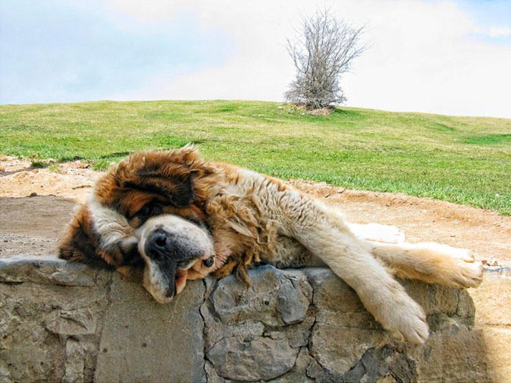 País Vasco con perro: Guía gratuita dogfriendly