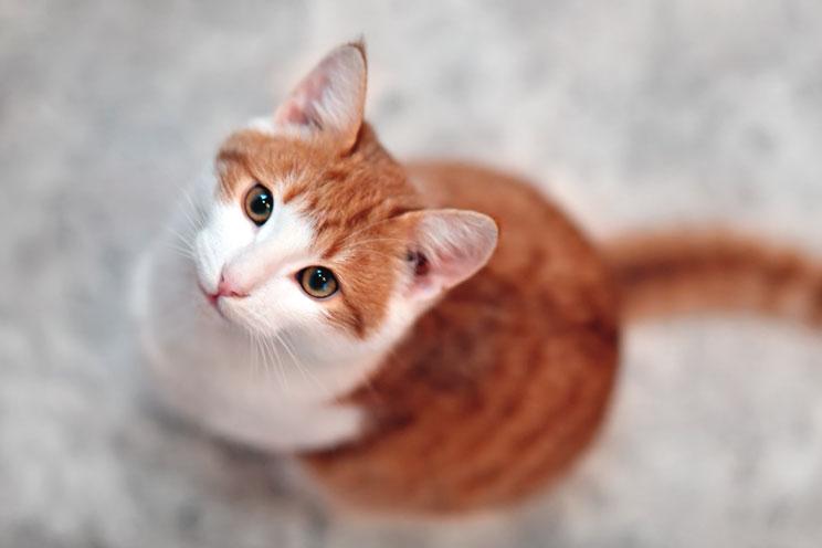 Por-que-mi-gato-orina-fuera-del-arenero-3