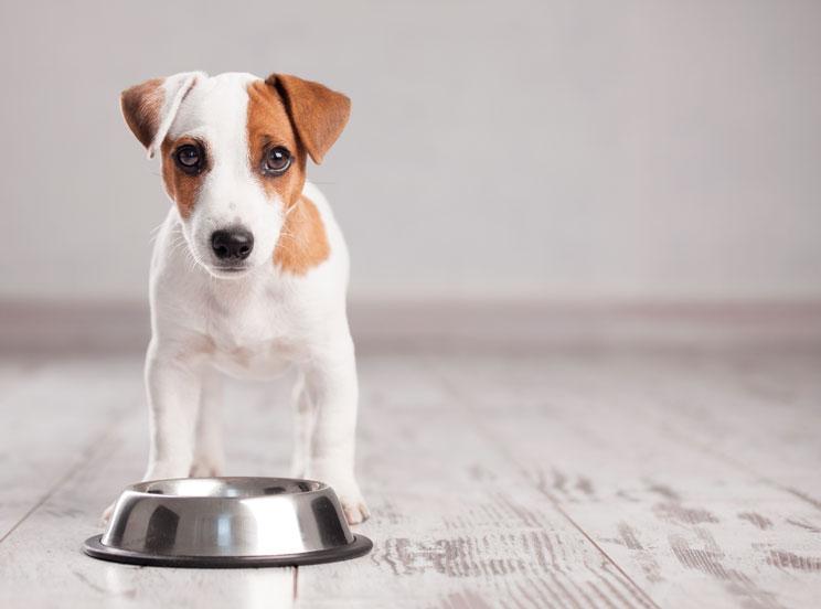 Trastornos-alimenticios-en-perros-1