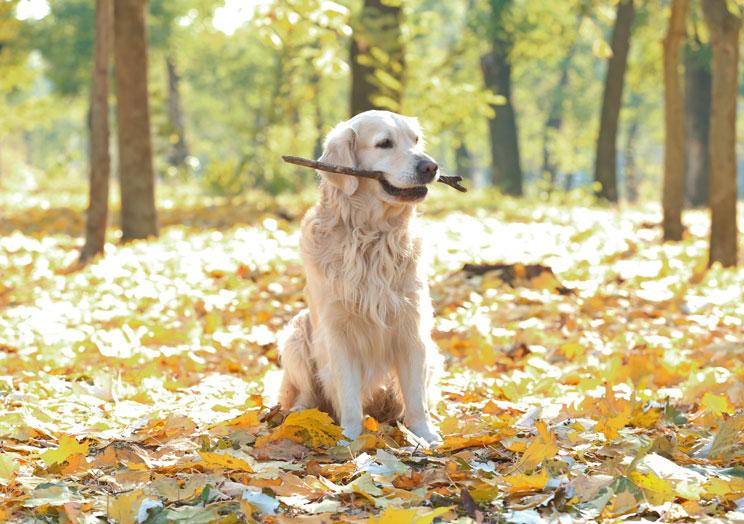 Trastornos-alimenticios-en-perros-conoce-sus-causas-y-como-evitarlos-4