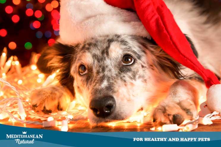 12 consejos de seguridad y bienestar para perros en Navidad