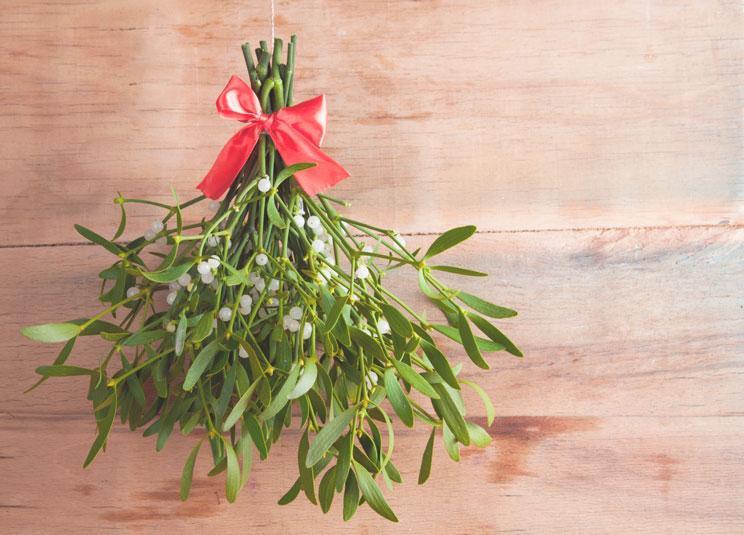 3-plantas-de-Navidad-peligrosas-para-perros-y-gatos-2
