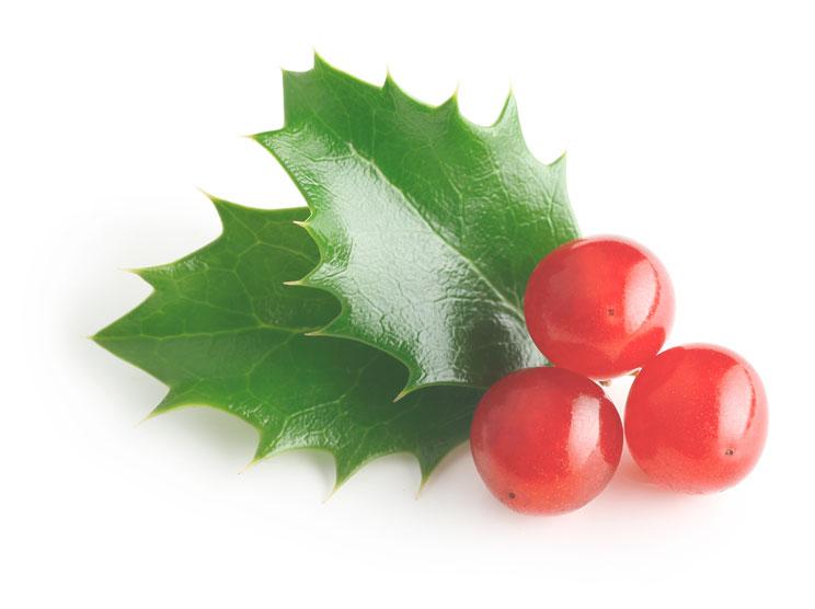 3-plantas-de-Navidad-peligrosas-para-perros-y-gatos-4