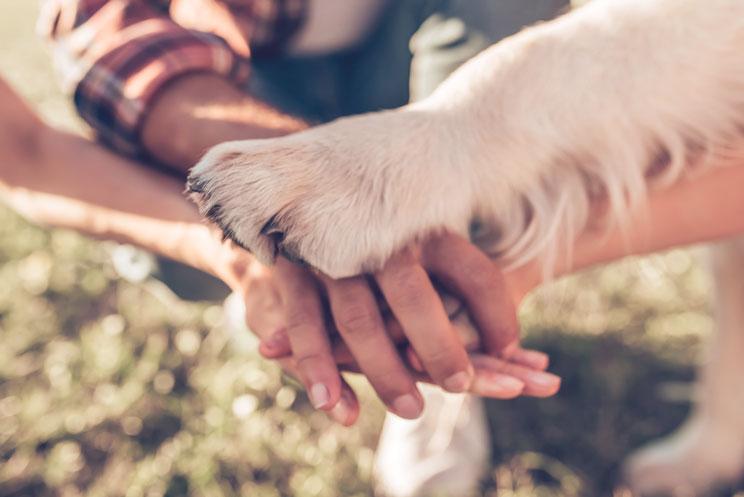 Antes-de-regalar-un-animal-valora-estos-5-aspectos-2