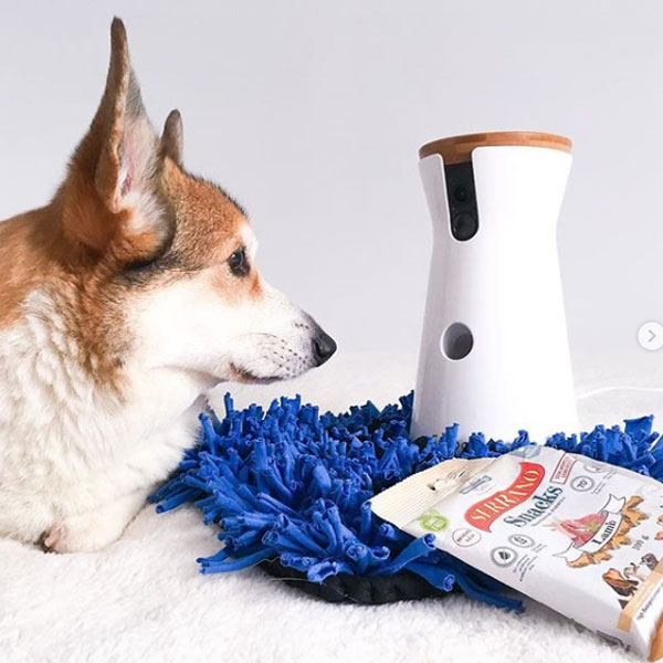 Captain Spok the corgi, Serrano Snacks para perros y Furbo