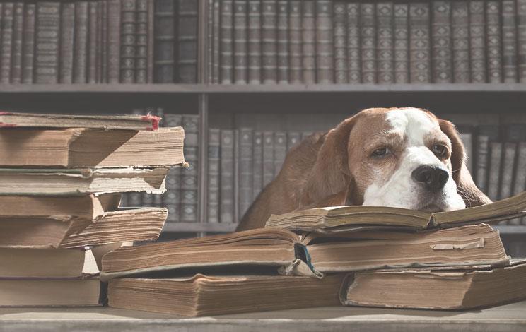 Charles Dickens: sus perros y su presencia en sus obras
