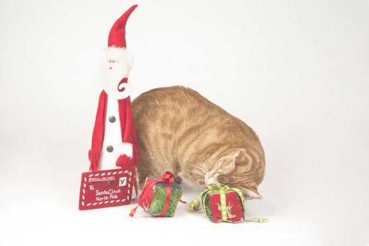 Evita-el-peligro-disfruta-de-una-Navidad-sin-sustos-junto-a-tu-gato-3