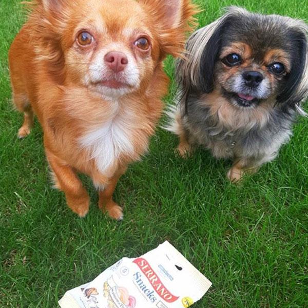 Pepcha Dog y Serrano Snacks para perros de Mediterranean Natural
