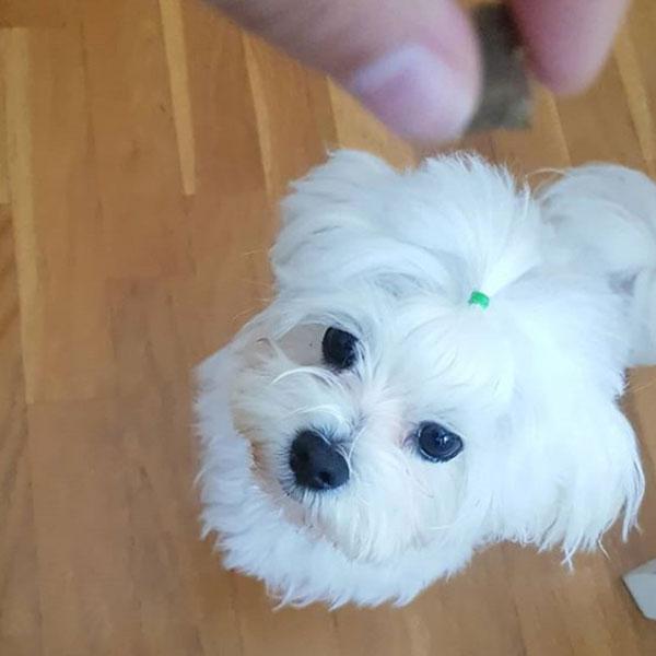 Selina Maltese y Serrano Snacks para perros de Mediterranean Natural