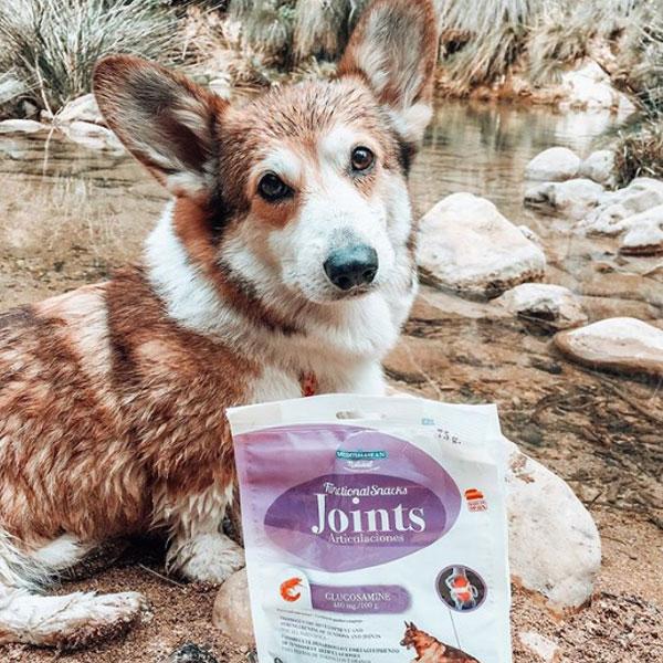 Spock el corgi manchego y Functional Snacks para perros de Mediterranean Natural