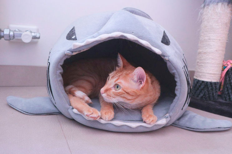 Como-afecta-el-frio-a-los-gatos-Consejos-para-protegerlos-4