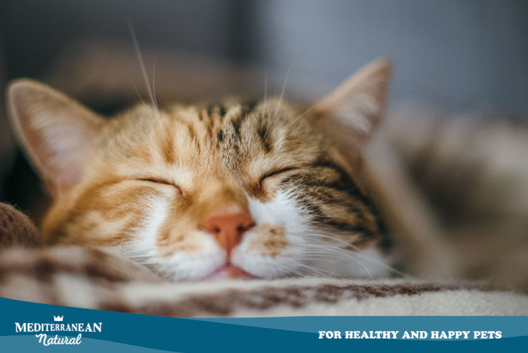 Cómo afecta el frío a los gatos: consejos para protegerlos