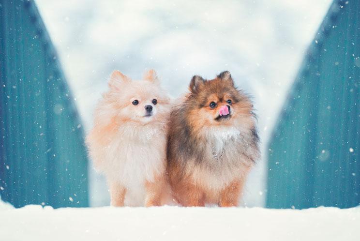 Cuidados-del-perro-en-invierno-4