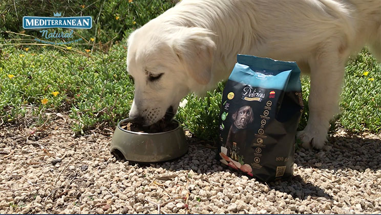 Alimento elaborado especialmente para cachorros
