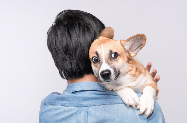 Cómo ayudar a un perro con miedo a ruidos fuertes