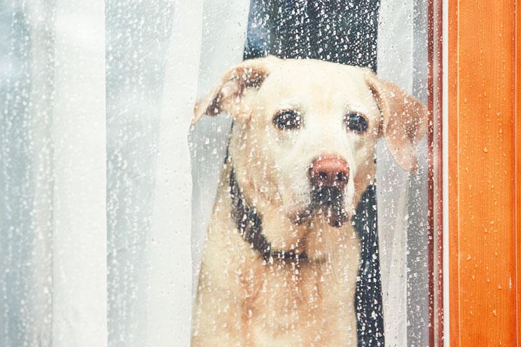 Como-ayudar-a-un-perro-con-miedo-a-ruidos-fuertes-2