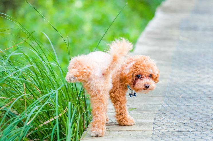 ¿Elegir un perro macho o hembra? Diferencias en carácter y comportamiento