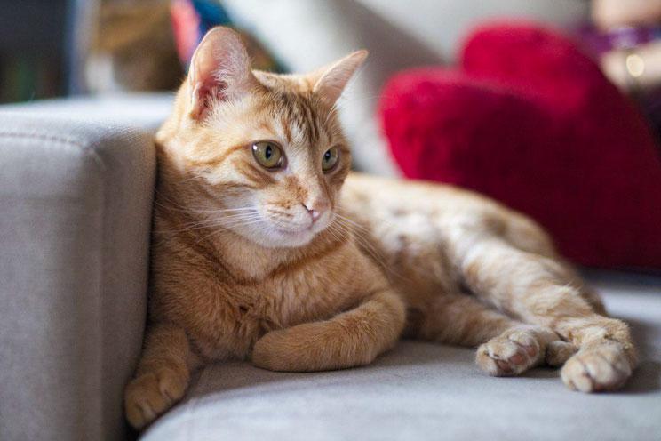 No lo quieras mucho ¡Quiérelo bien! ¿Cómo ayudar a nuestro gato a ser feliz?
