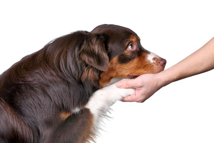 Descubren una nueva técnica para tratar la cojera en los perros