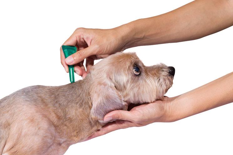 Mi-perro-tiene-pulgas-que-hago-2