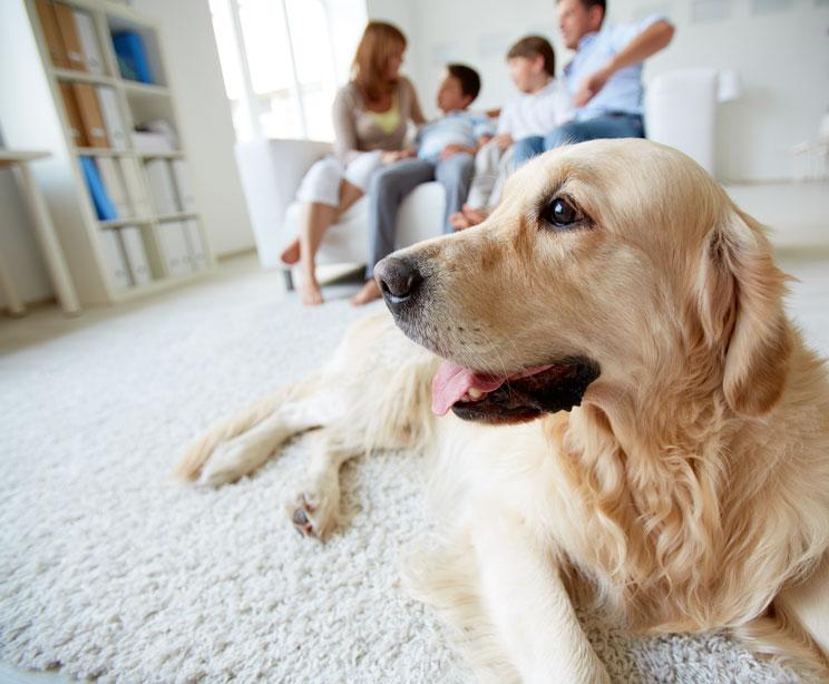 Mi-perro-tiene-pulgas-que-hago-7