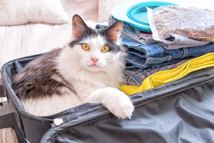 Qué hacer con mi gato si me marcho de vacaciones