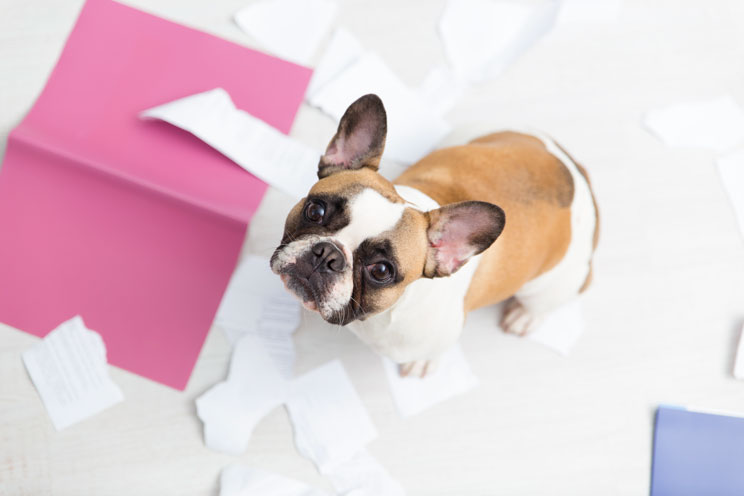 11 señales de estrés en perros ¡Aprende a identificarlas!