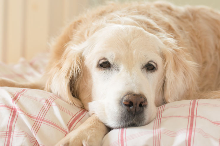 11-senales-de-estres-en-perros-aprende-a-identificarlas-2