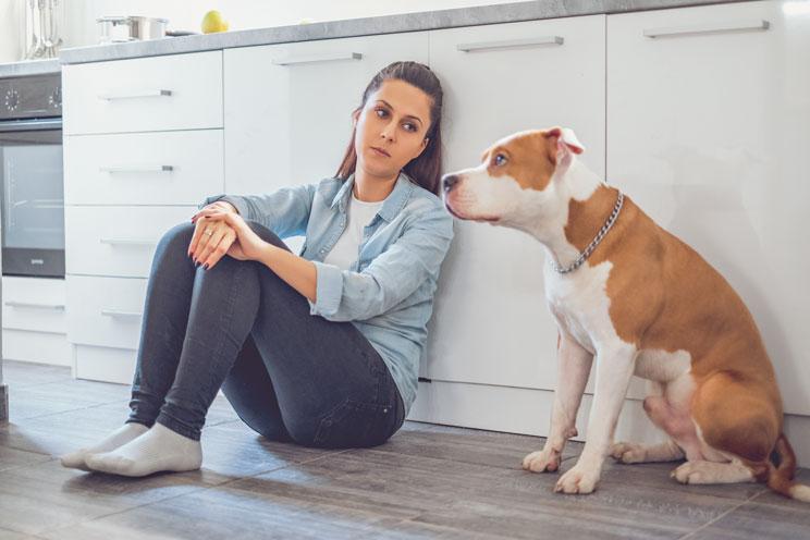 11-senales-de-estres-en-perros-aprende-a-identificarlas-3