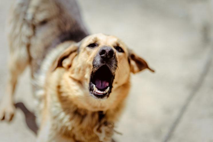 11-senales-de-estres-en-perros-aprende-a-identificarlas-5