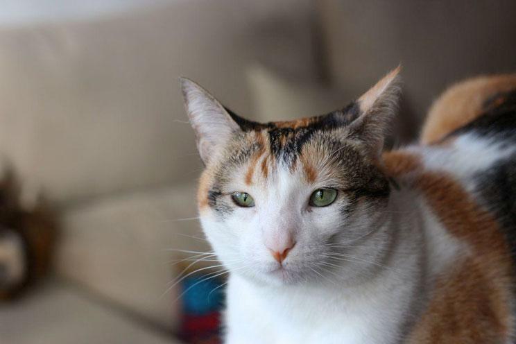 Embarazo-con-gatos-todo-sobre-la-toxoplasmosis-3