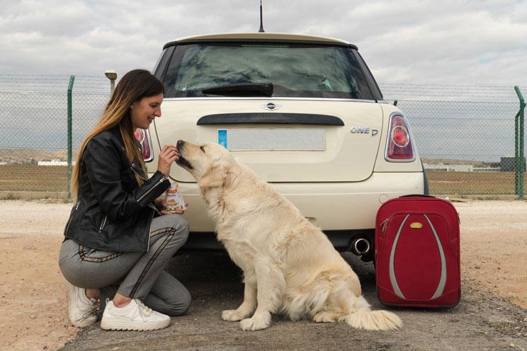 Pets-travel-la-guia-viajera-para-familias-perrunas-2