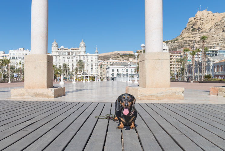 Pets-travel-la-guia-viajera-para-familias-perrunas-4