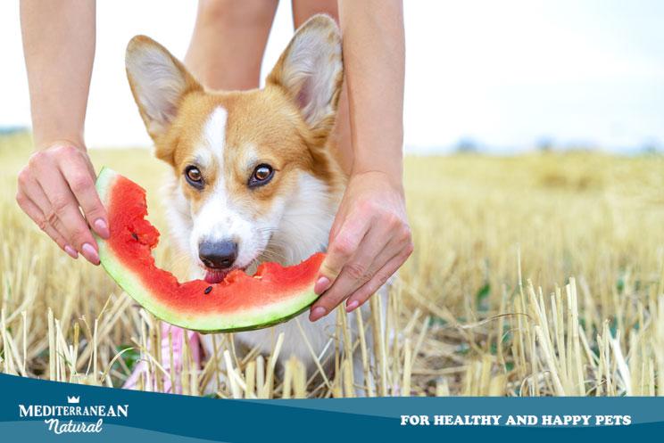 8 frutas frescas que los perros pueden comer en verano